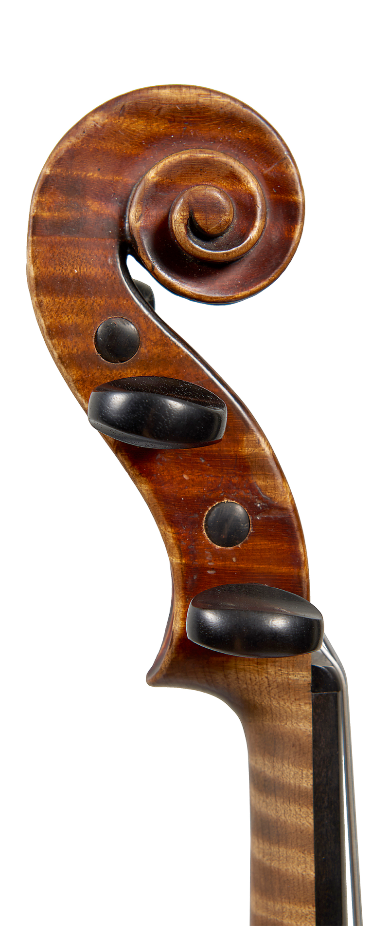 Scroll of a violin by ASP Bernardel, 1829. The wood chosen for this violin is exquisite and the rich burgundy varnish covering the instrument is still largely intact.