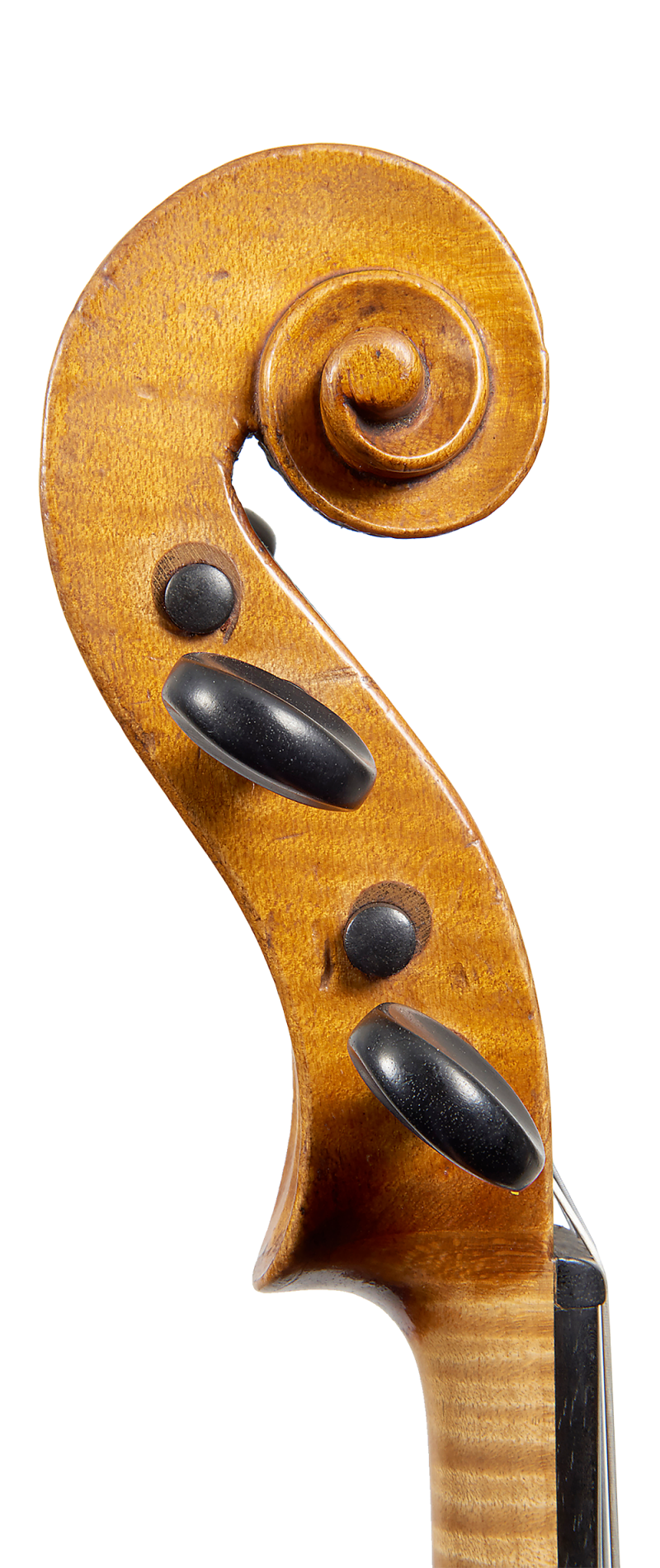 Scroll of a violin by Johannes Theodorus Cuypers, The Hague, 1807